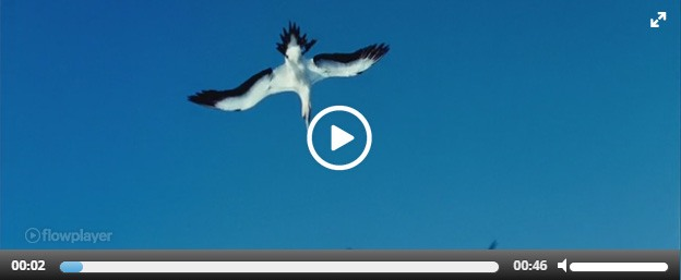wp-video-plugins-02-easy-video-player